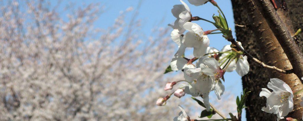 桜雲イメージ